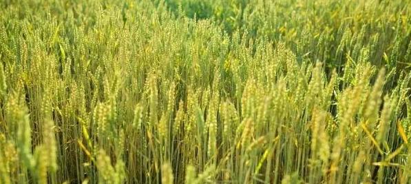 2017年农业种植类补贴14项,你不试一下?