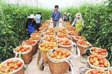 国家支持农民靠产业增收,哪些产业将成为重点增收对象?