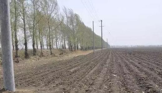 并不是所有的土地都能领取农业补贴,这几种类型的土地要靠边站!