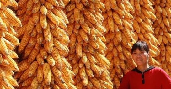 玉米、大豆、棉花、食用油、食糖本月将有何变局?快看5月中国农业部市场供需报告
