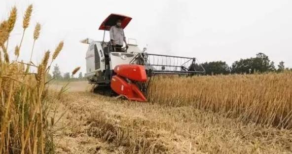 快夏收了,但今年小麦价格下行压力大!看业内人士如何说?