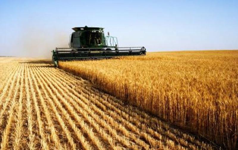 趁小麦价格猛涨,抓紧时间抢收!这些地区将迎来雨水猛攻!