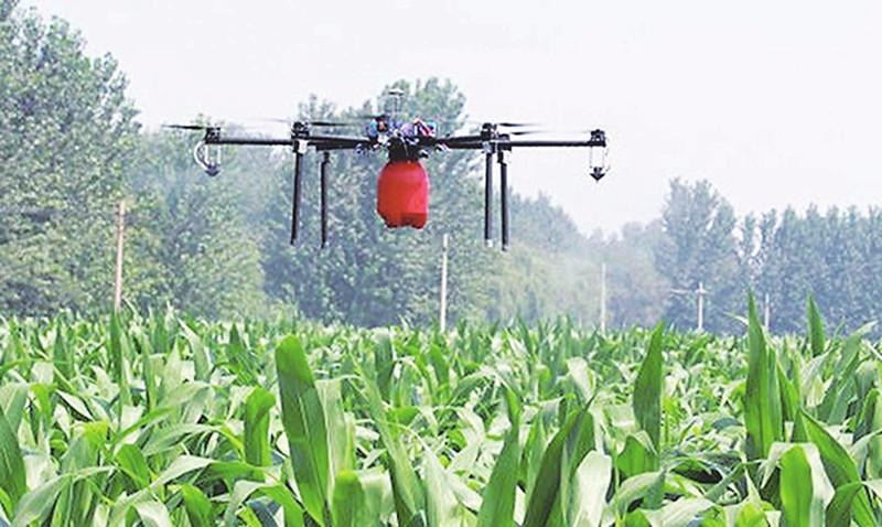 玉米苗后除草剂使用七大注意事项!想省心就看看