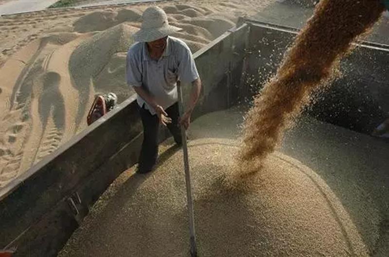 实战分享|种植3600亩地,一年收获七十万,这位种粮大户如何实现的?!