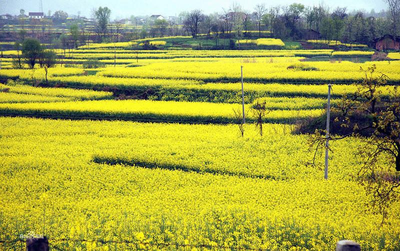 重磅|5大农业投资项目趋势解读:新兴市场、百亿级规模、风口