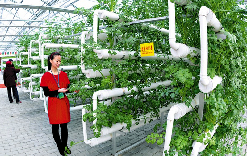 农业最高明做法:降低一半成本,提高10倍利润?绝!