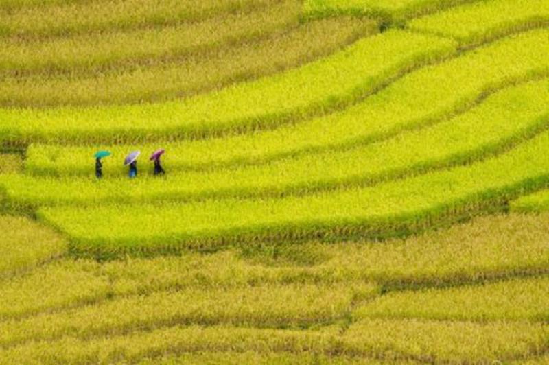 视频|6大部委发话:未来农业龙头企业要扛大梁!