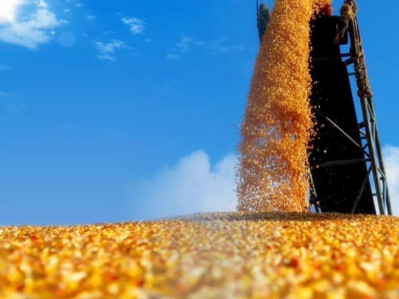 探究|中国农业丰收不断,为何粮食进口节节攀高?