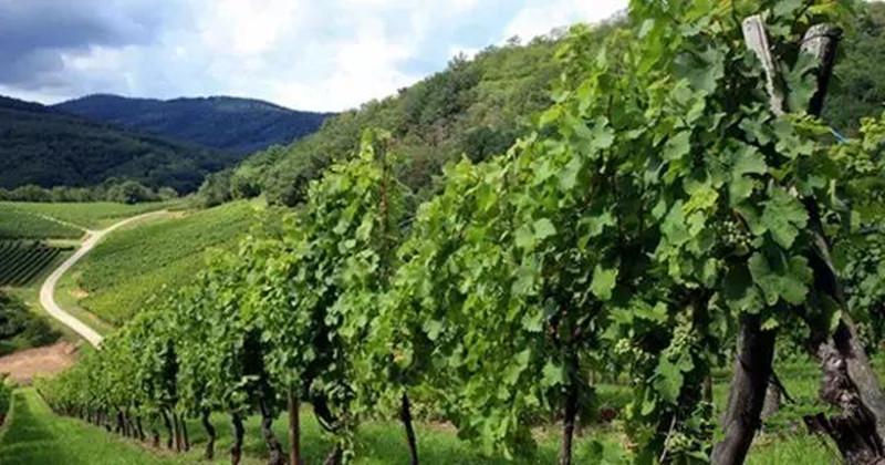 意大利:国土比我国云南还要小,生态农业却居欧洲第一
