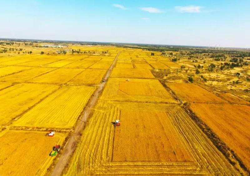 探究|精细化程度、种植水平都不如中国,但美国农业却傲视全球,为何?