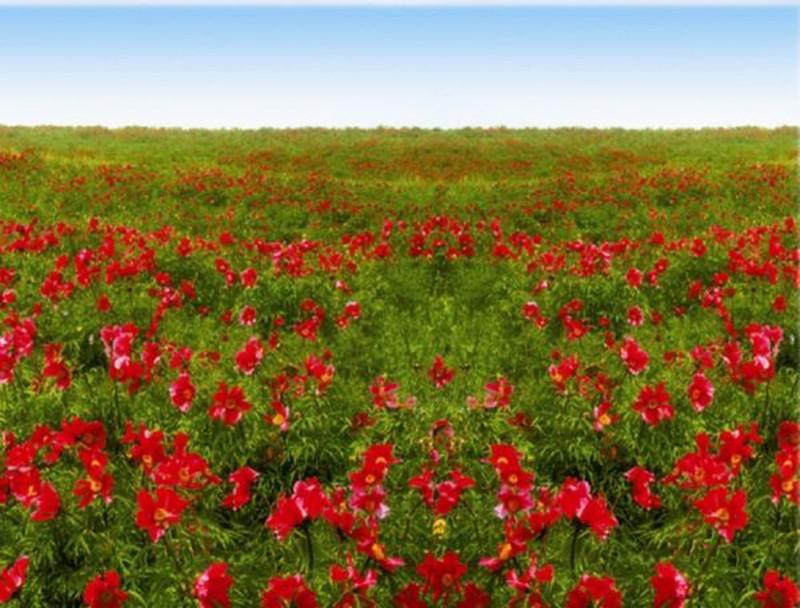 此种植物兼具观赏和经济价值,亩产值达上万,农户靠它补贴家用