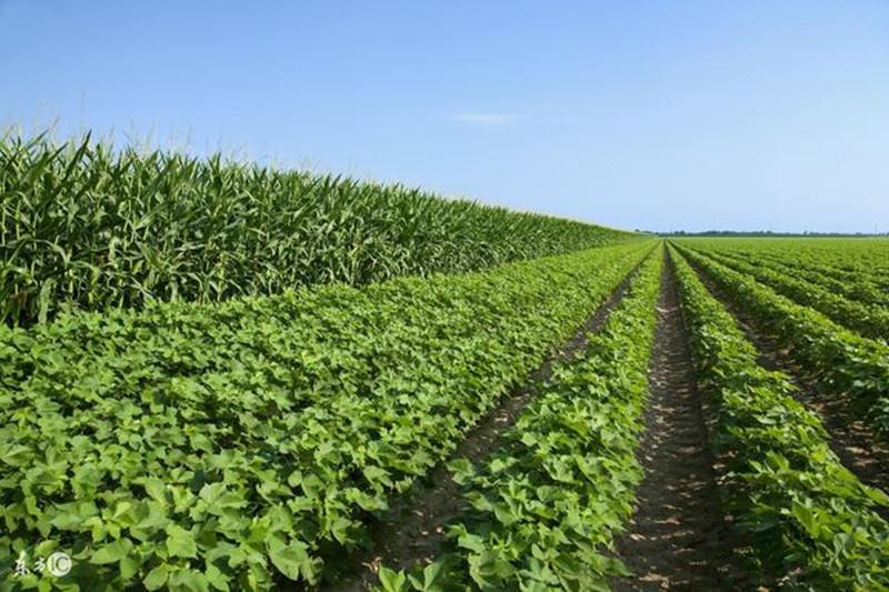 在未来,农民怎么种地才会不被淘汰?