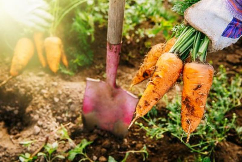 美国农业称霸全球的15个理由,看完才知道中国农业努力的方向