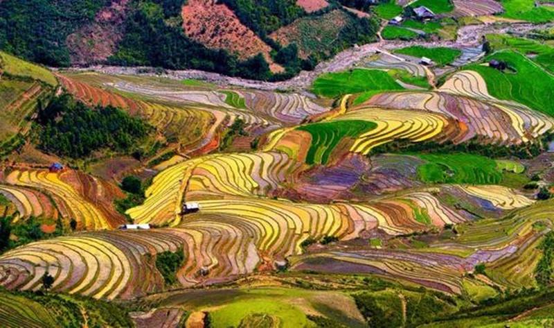 彩色水稻当风景种植,上千亿元的利润空间,你心动了吗?