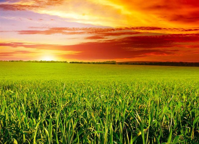 中国农业,只有实现规模化才有出路,元芳,你怎么看?认同吗?