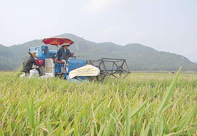 未来十年,农业将朝这5大方向开展,农民要心中有数?