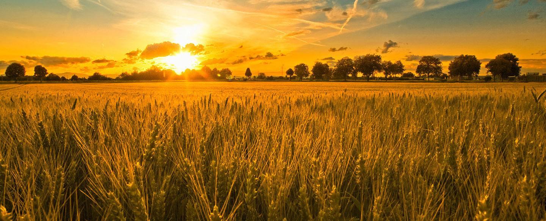 年终总结!中国农业8大变化