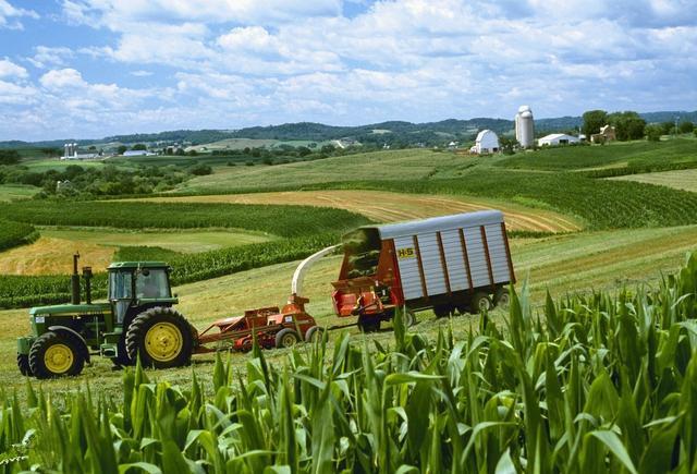 美国玉米亩产最高达2269kg,高产有何秘方?中国是否可以做到?