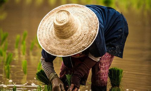 农技服务异军突起 天天学农入选农技推广协会常务理事