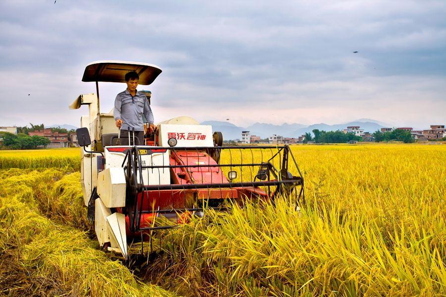 1+N种植,农业增收赚钱好手段!