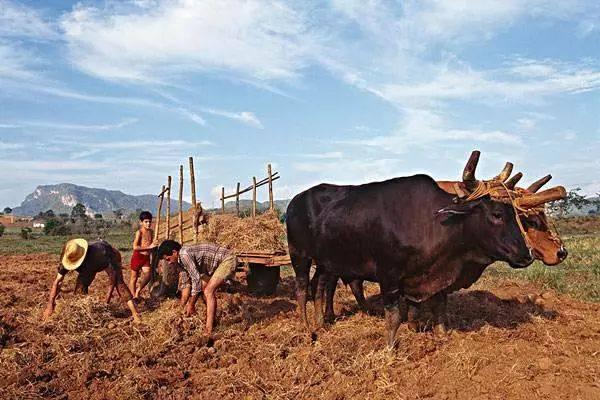 古巴:靠农业拯救国家!以下6大做法让你见证奇迹……