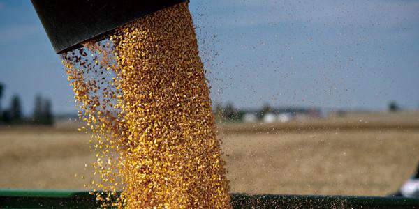 重磅|美国、巴西农业已面临危机!中国农业该如何避免?