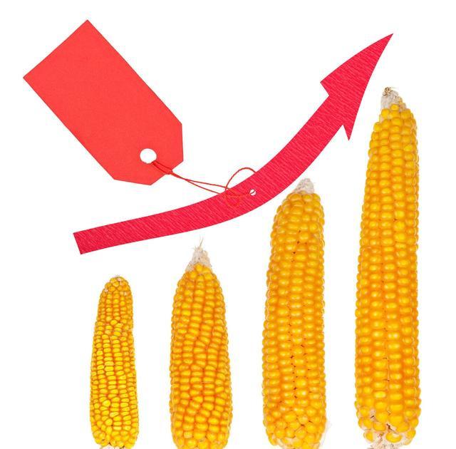 悲催!玉米价格涨了!但你没有玉米可卖...