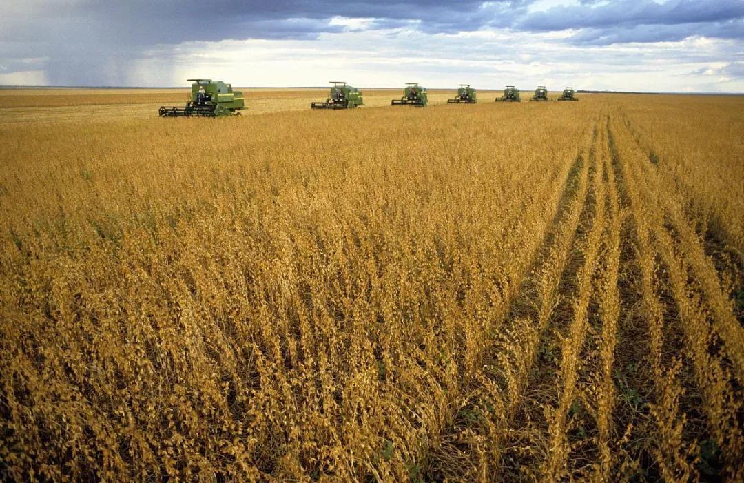 探究|为什么中国的大豆主要靠进口?原因竟然是...