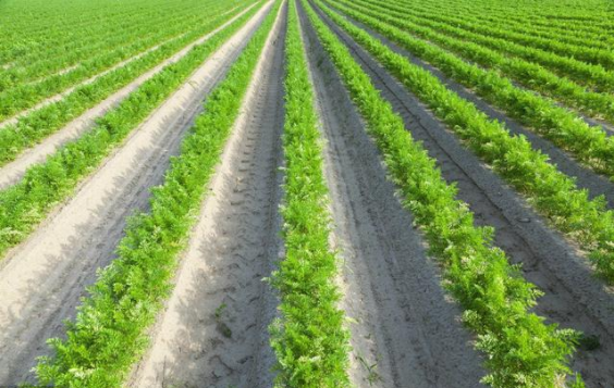 订单农业能否成功?看这里...