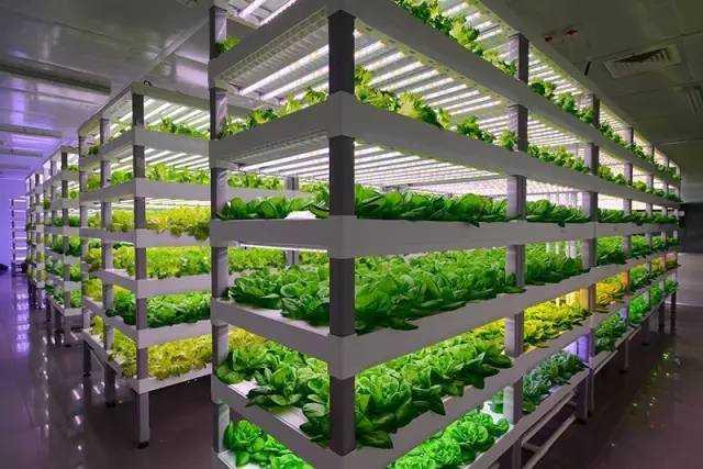 揭秘|5大农业种植创新项目(绝对颠覆想象)