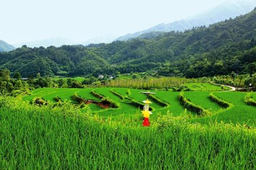 重磅|生态循环农业4种模式详解(附案例)