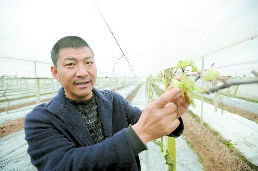 从亏损几百万到年入400万,看他如何用小葡萄实现农业大梦想?