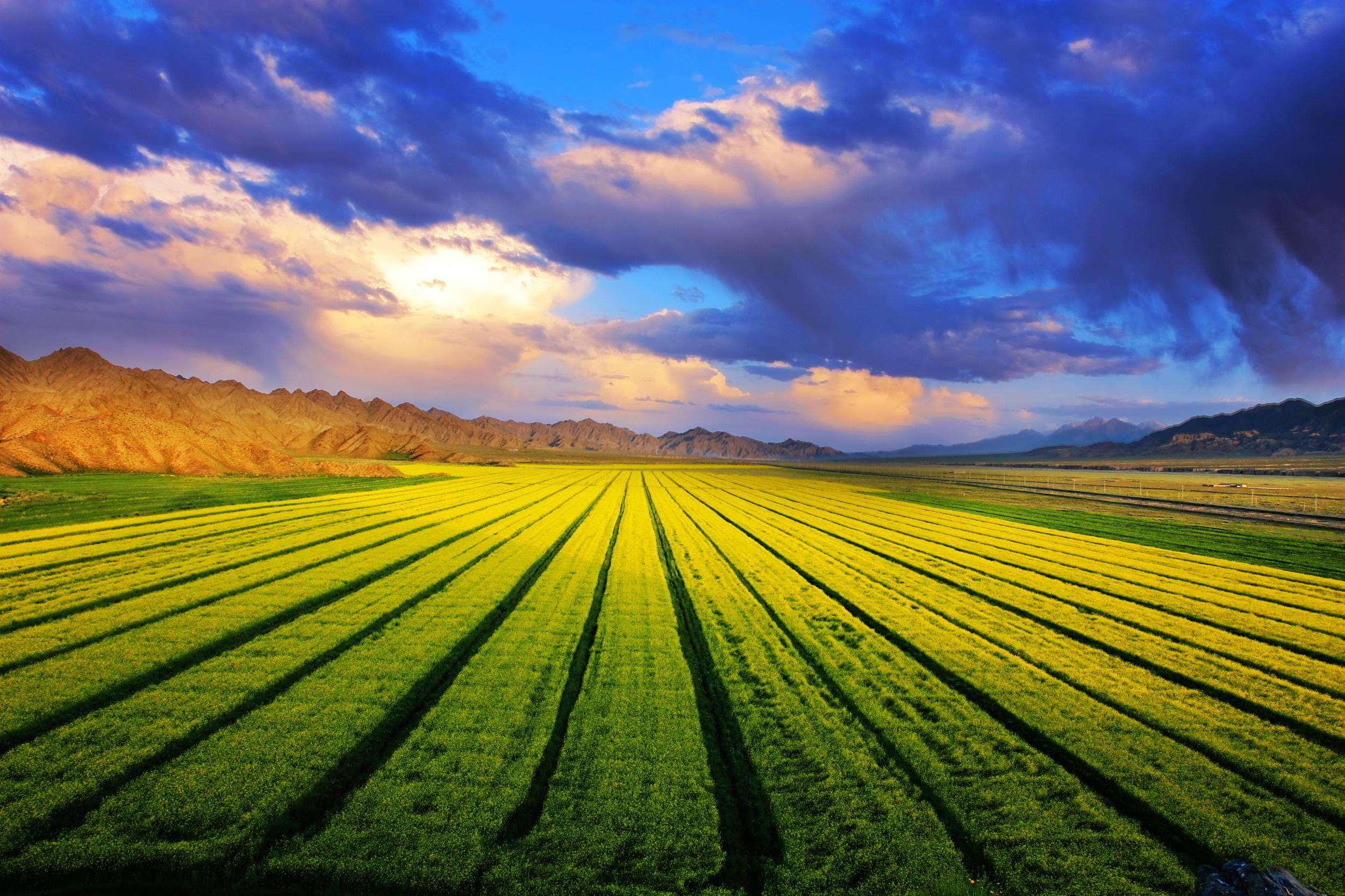 三农日报|玉米补贴明年或将要取消;新商机:山葵种植