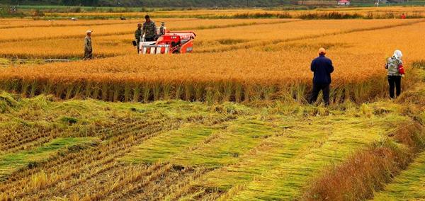 真棒!这里有10个农业产业链最好的案例(建议转发)