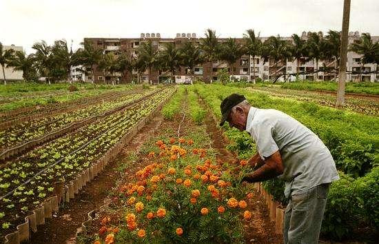 三农日报|三大粮食作物制种纳入农业保险;航天农业崛起