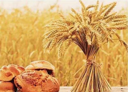 三农日报|中央财政大力扶持农产品加工业;种植丝瓜能年入300万
