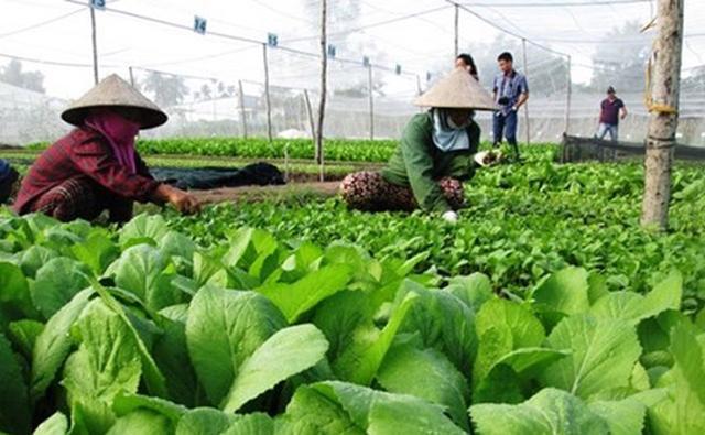 三农日报|农学专业受为何受高校青睐;设施农业的4个趋势;土壤污染防治法明年施行