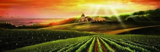 三农日报|专家预测:未来10年又是种业发展的黄金期;农信互联完成3.64亿元B轮融资