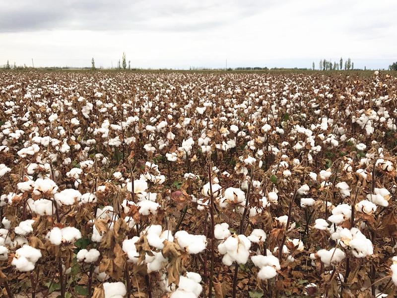 农发贷:金融科技赋能三农,助力涉农企业融资