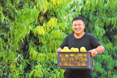 文艺青年返乡种冬桃,想靠种植赚第一桶金!
