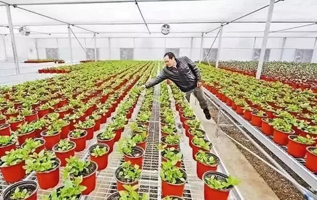 """他搞""""盆栽野菜""""一年纯赚50万,但面临缺钱、缺人才的囧地"""