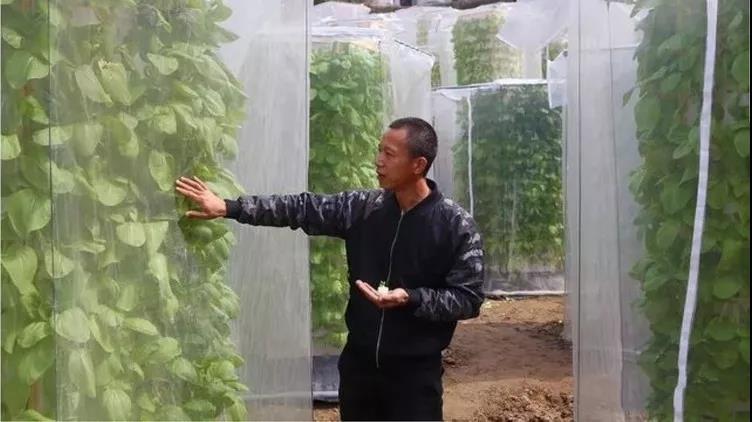 """牛逼的创新!中国农民发明""""空气种菜"""",收成翻6倍"""
