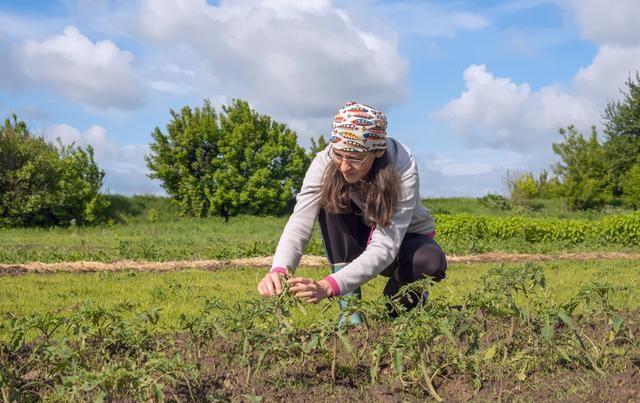 新招!换一个思维做农业,收入也会翻番!
