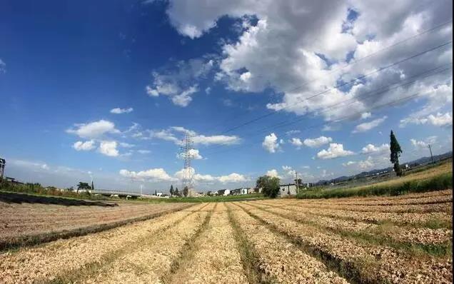 传统农业2大顽症难解!6个案例深度剖析干农业失败的原因