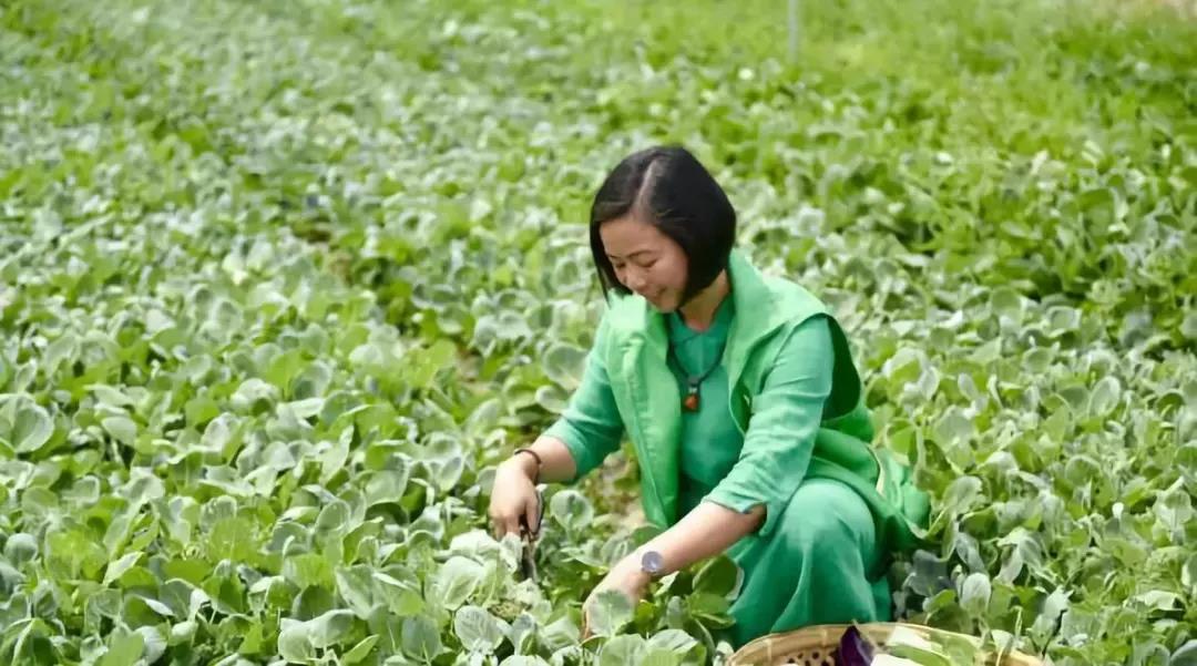 她从3亩地开始,现在发力农旅,产值超5000万