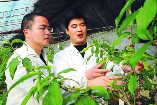 就是不一般!高材生做农业,他的成功用了这4招!