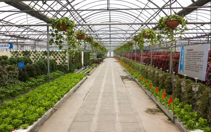 2019年国家现代农业产业园创建名单
