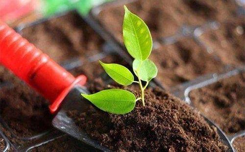 污染土壤修复技术研究现状与趋势探讨
