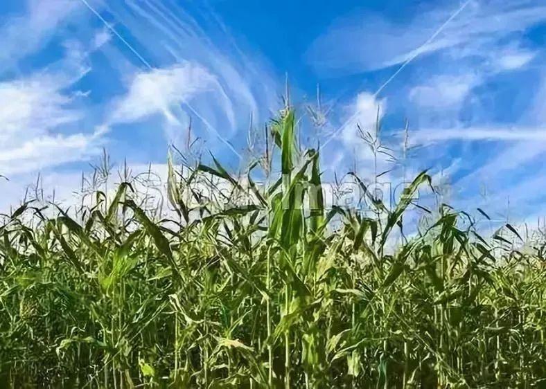 大研究|中国农业发展的未来战略:新思维、新玩法、新未来