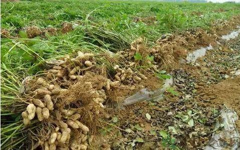 农业农村部: 财政部发布2019年重点强农惠农政策!